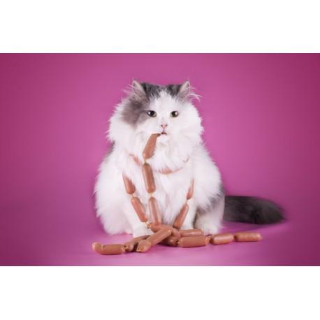 régime pour chat obèse sur http://www.catapart.fr/conseils-comportementaux/10062-7-conseils-chat-grossit.html