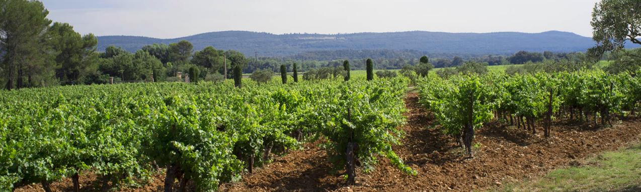 Le Château de l'Escarelle : un magnifique domaine viticole dans le Var